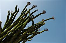 Free Cactus Reaching For The Sky Stock Photos - 20747293