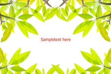 Free Pattern Of Green Leaves On White Background Royalty Free Stock Photos - 20748258