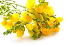 Free Bouquet Of Yellow Flowers Royalty Free Stock Image - 20750246