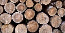 Free Wood Logs Stock Image - 20750511