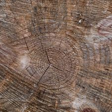 Free Tree Trunk Closeup Stock Photos - 20750583