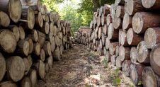 Free Wood Logs Royalty Free Stock Photos - 20750708
