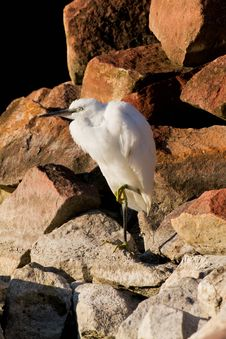 Free Egret Stock Photography - 20750722