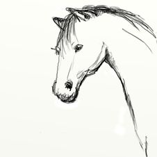 Hand Drawn Horse Head Sketch Royalty Free Stock Images