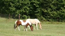Free Two Horses Side By Side In Pasture Royalty Free Stock Photo - 20753225