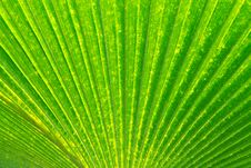 Free Leaf Texture Stock Images - 20754204