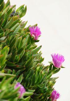 Free Flowers Stock Photos - 20754673
