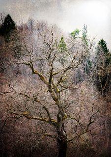 Mossy Tree Royalty Free Stock Image