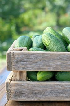 Cucumbers In A Box. Royalty Free Stock Photography
