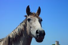 Free Horse In Andalusia On A Blue Sky Stock Images - 20758064