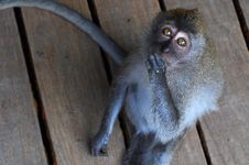 Free Monkey Sit On The Pathway Royalty Free Stock Photography - 20759607