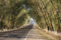 Free Straight Road Between Trees Stock Photography - 20766592