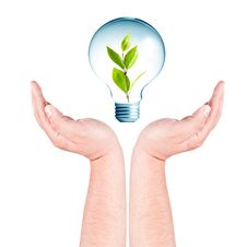 Free Plant Growing Inside The Light Bulb On Hands Royalty Free Stock Photography - 20761127