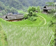 Free Rice Terrace Village Royalty Free Stock Photography - 20761267