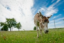 Free Donkey Stock Images - 20761414