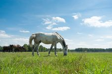 Free Horse Stock Photos - 20761513