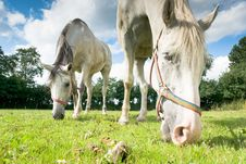 Free Horse Stock Image - 20761521
