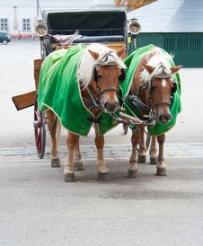 Pair Of Creamy Ponies Royalty Free Stock Photo