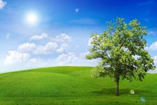 Free Alone Tree Stock Photos - 20761963