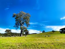 Free Summer Landscape Farm Royalty Free Stock Images - 20763239