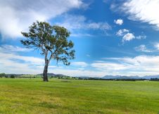 Free Summer Landscape Tree Royalty Free Stock Photo - 20763515