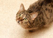 Free Cat Sat On The Floor Stock Photos - 20763783