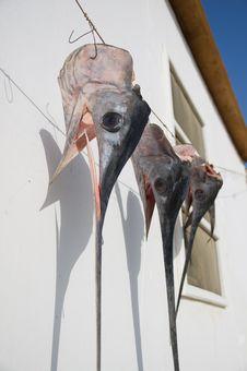 Free Swordfish Heads Royalty Free Stock Photos - 20763798