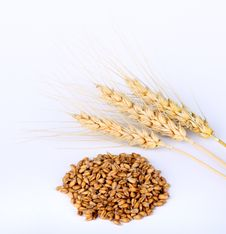 Free Wheat Heads And Kernels Royalty Free Stock Photos - 20765048