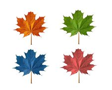 Free Maple Leaf Stock Photo - 20765720
