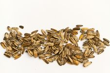 Free Sunflower Seeds Royalty Free Stock Photo - 20767115
