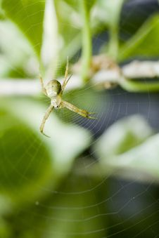 Close Up Of A Green Spider In Its Web Stock Photos