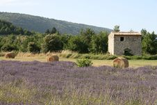 Lavender Field In Provence Stock Photography