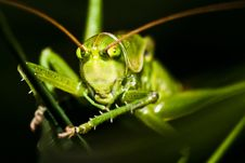 Free Grasshopper Hiding In Grass Stock Photo - 20768860