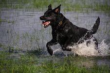 Free Wet Gundog Royalty Free Stock Image - 20771876