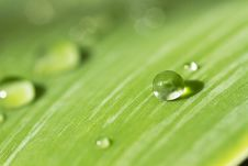 Free Water Droplet On A Leaf. Royalty Free Stock Photography - 20772557