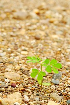 Free Young Plant Stock Photography - 20773362