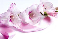 Free Romantic Flower Royalty Free Stock Photo - 20775845