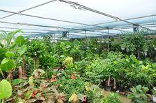 Korean Greenhouse Stock Image