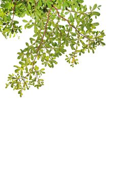 Free Green Leave On White Background Stock Photography - 20779072