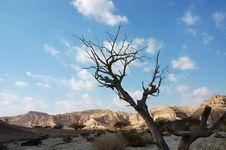 Free Dry Tree. Royalty Free Stock Photography - 20779307