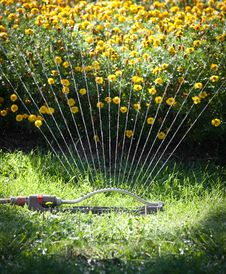 Free Watering Flowers Stock Image - 20779381