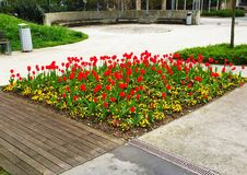 Free Flower Bed With Red Tulips And Yellow Flowers In Tivoli Park  In The Center Of Ljubljana  Slovenia. Royalty Free Stock Photography - 207785487