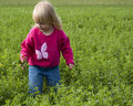 Free Little Girl In Field Royalty Free Stock Image - 20785156