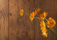 Orange Flowers On Wood Background Stock Images