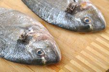 Free Fish Market Stock Photos - 20784073