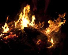 Free Campfire Royalty Free Stock Photo - 20785105