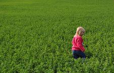 Free Little Girl In Field Stock Photo - 20785120