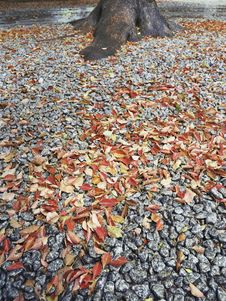 Free Fallen Leafs Royalty Free Stock Photo - 20786935