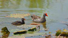 Free Bird  , Thailand Stock Photography - 20787882