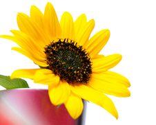 Free Summertime Royalty Free Stock Image - 20788426